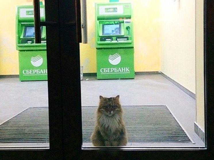 Кот в отделении Сбербанка