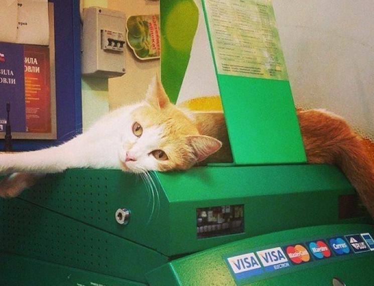 Кот в филиале Сбербанка