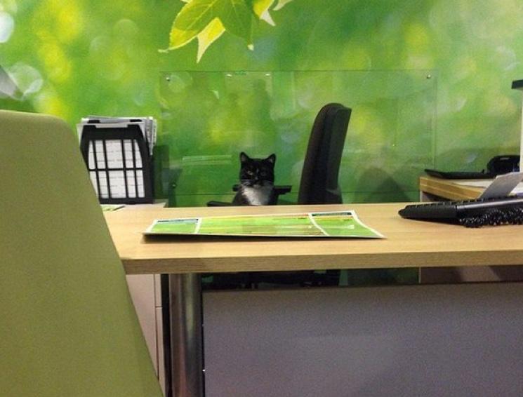 Кот в Сбербанке за столом