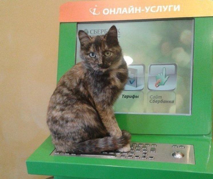 Кошка на терминале Сбербанка
