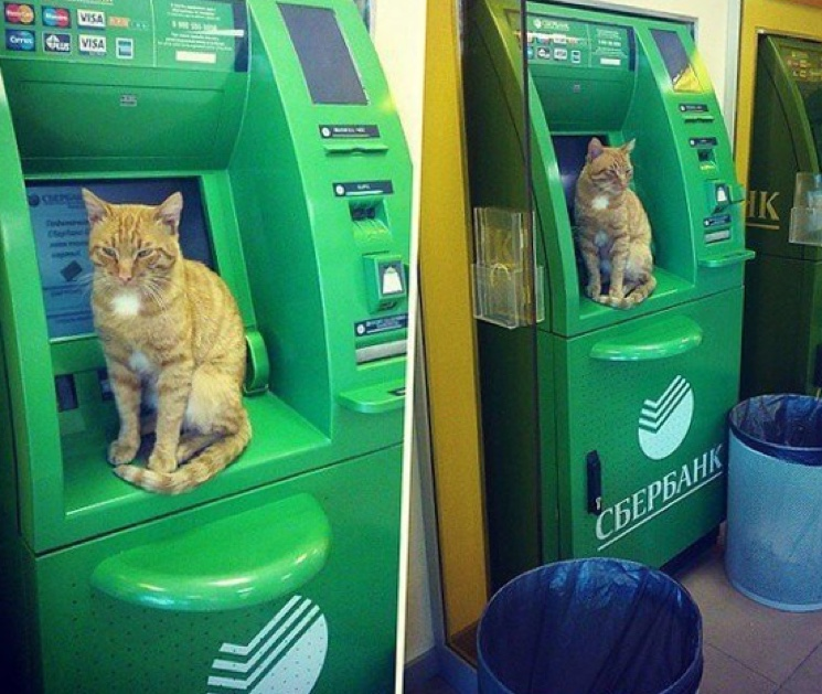 Кот на банкомате Сбербанка