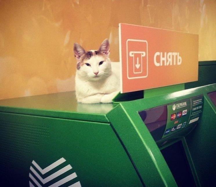 Кот и банкомат Сбербанка