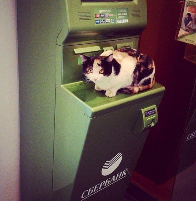 Кот и терминал Сбербанка