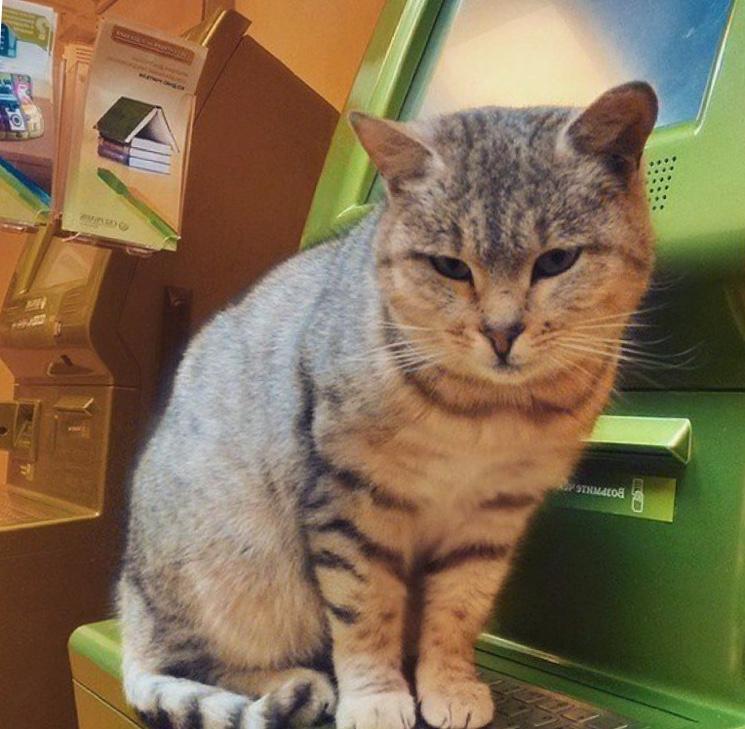 Кошка в Сбербанке